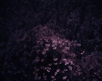 枝垂桜のライトアップ2016・六義園なんだけど・・・:R2