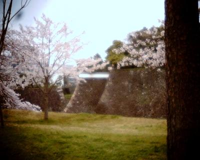 皇居乾通りで桜・皇居:Entry