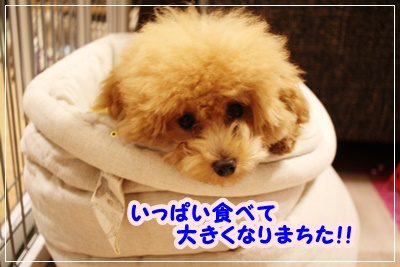 IMG_2279①