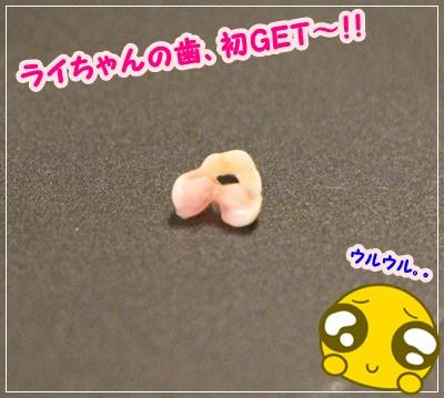 IMG_4647 (2)