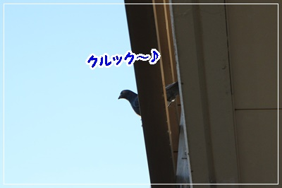 IMG_6308 (2)