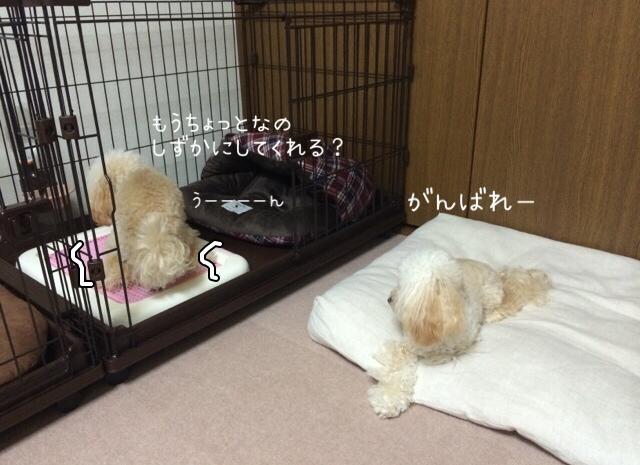 2015.10.26 おトイレ中モコ3