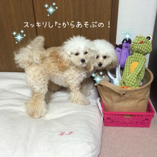 2015.10.26 おトイレ中モコ5