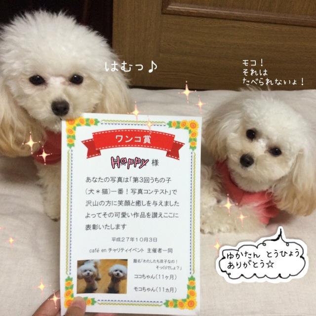 2015.11.19 賞状