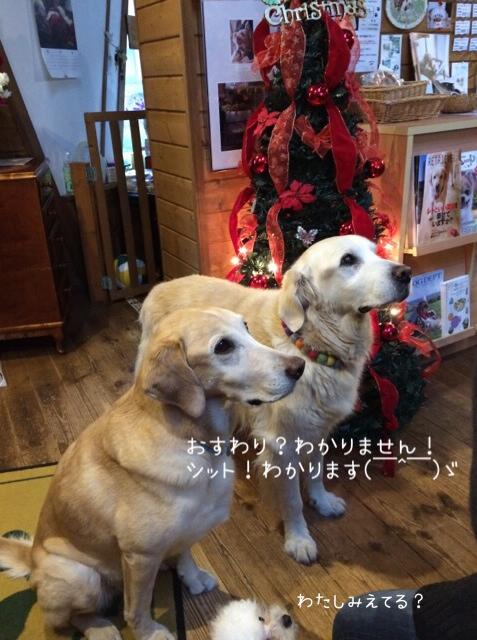 2015.11.23 うちの子記念日5