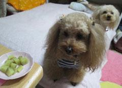 真夜中芋食犬1