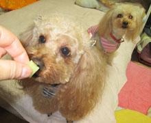 真夜中芋食犬8