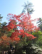 秋の宮島へ12