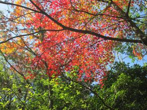 秋の宮島へ13