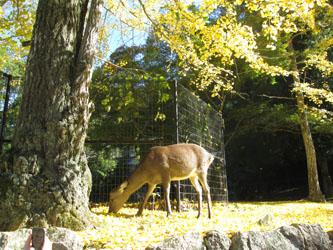 秋の宮島へ15