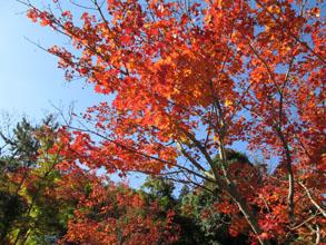 秋の宮島へ11