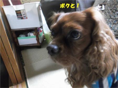 02_convert_20151120180709.jpg