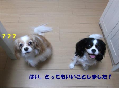 03_convert_20151125190319.jpg