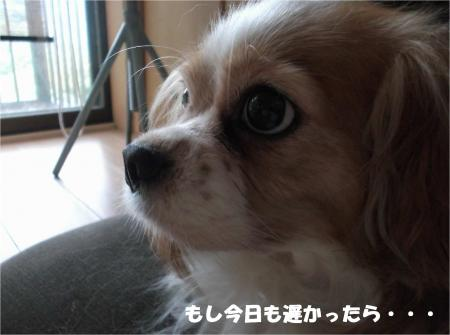 04_convert_20151016183103.jpg