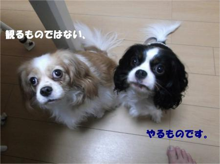 05_convert_20151104182102.jpg
