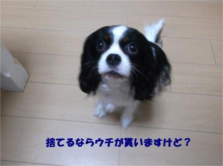 05_convert_20151105174549.jpg