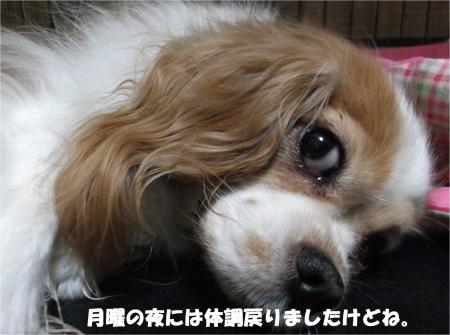 07_convert_20151027174647.jpg
