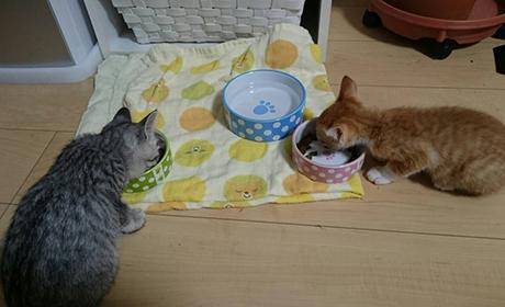 仲良くとっかえっこしながらのお食事