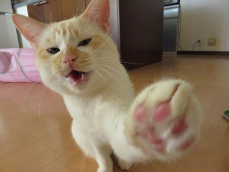 カメラに猫パンチ!元気いっぱいです