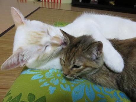 かわいい猫添い寝❤(´ω`*)