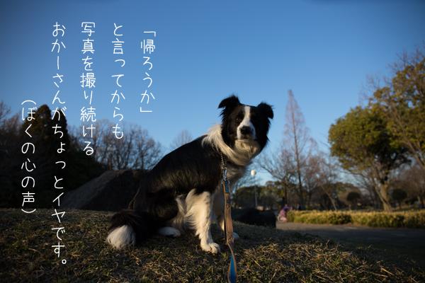 IMG_8099.jpg