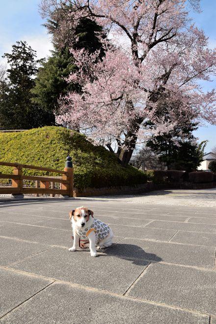 2016わんぱく公園059
