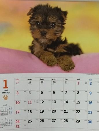 カレンダー井上さん
