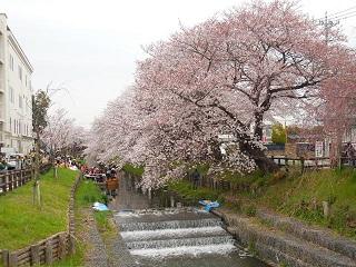 kawasaku2.jpg