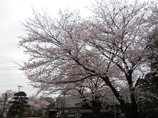kawasaku24.jpg