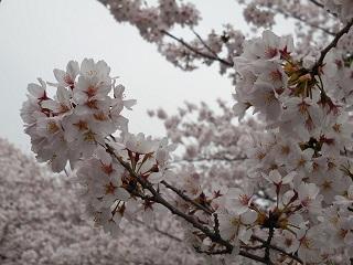 kawasaku5.jpg