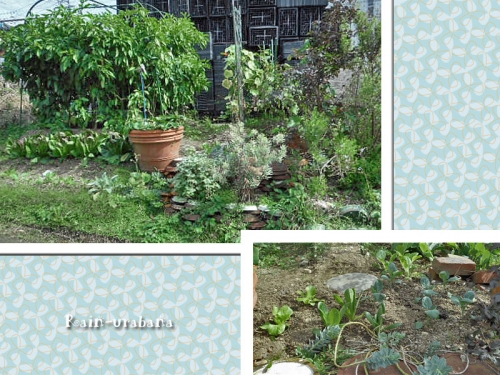 猫の額畑...ところ狭し植え (^ ^;