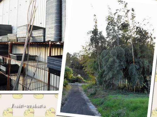 枝を頂いたので...竹林へ!