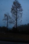 葉が落ちても、なお存在感