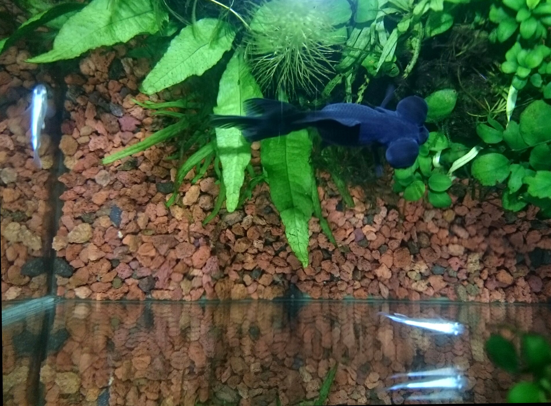 20151103-GoldFish_Killifish-X01.jpg
