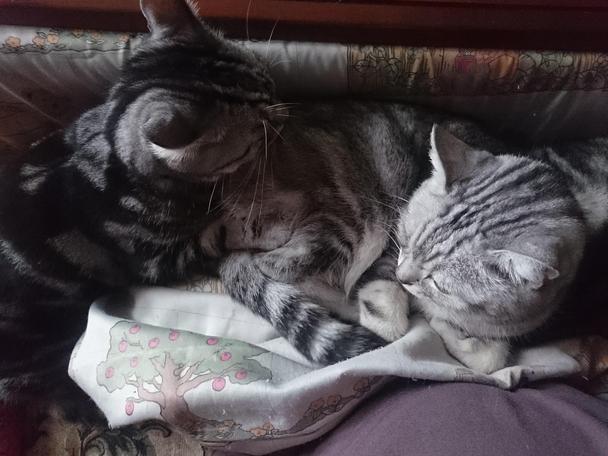 20151105-Cats-X01.jpg