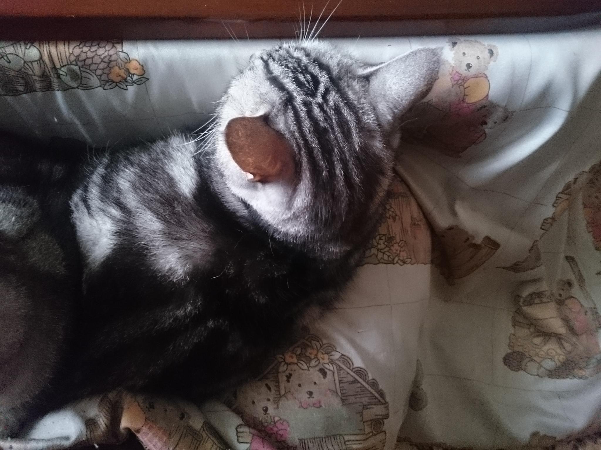 20151105-Cats-X03.jpg