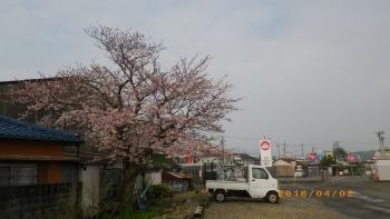IMGP2892.jpg
