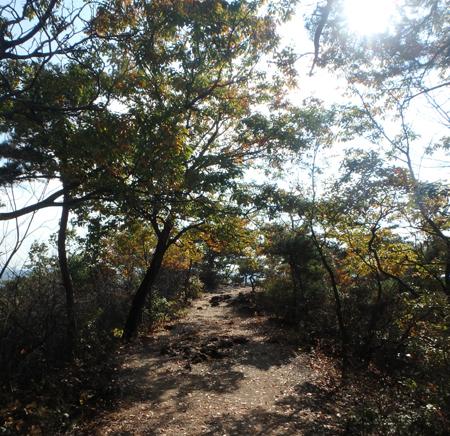 27_11_22 足利の織姫公園 2