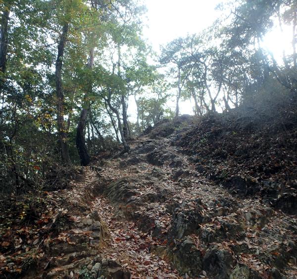 27_11_22 足利の織姫公園 4
