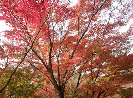 27_11_22 足利の織姫公園 もみじ谷