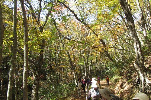 楽しい森歩き