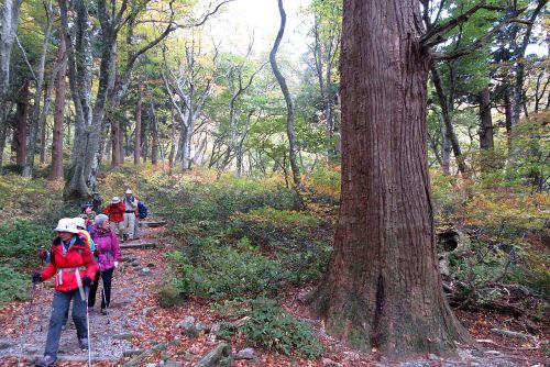ブナとスギの混じる森
