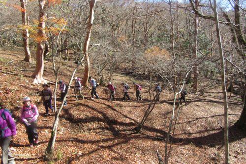 ヒメシャラ林の登り