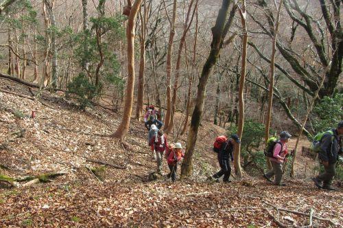 ヒメシャラ林を登る