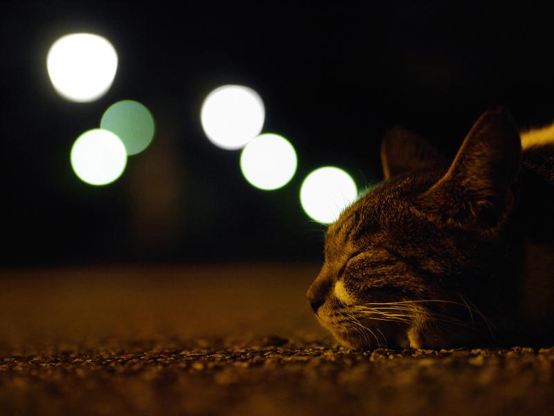 秋の夜夢見る猫2