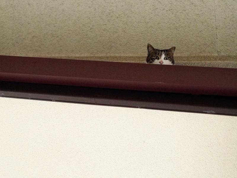 視線の先にいた白キジ猫