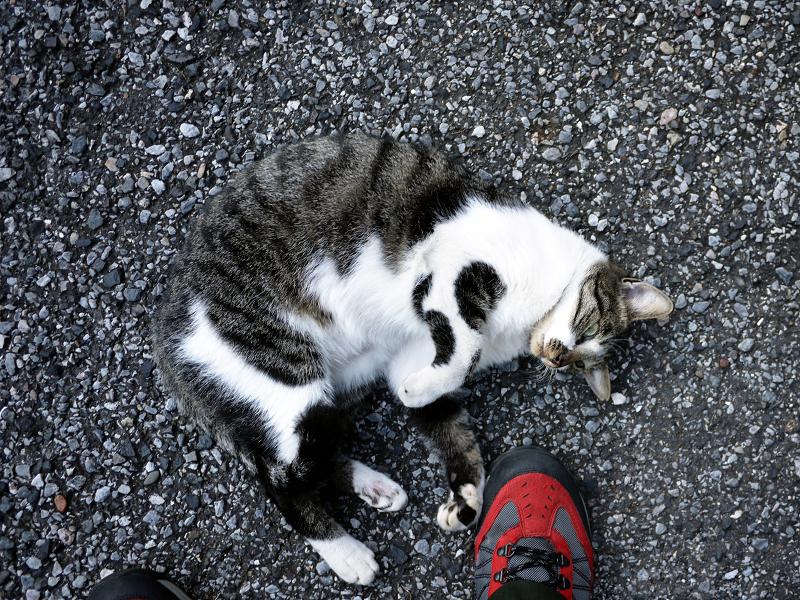 足下で靴で遊ぶ猫1