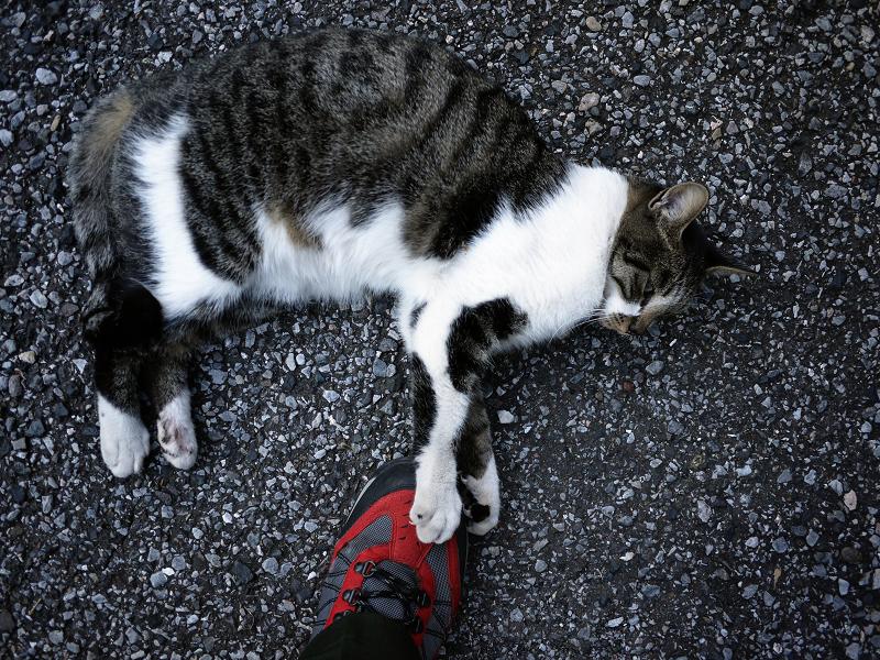 足下で靴で遊ぶ猫2