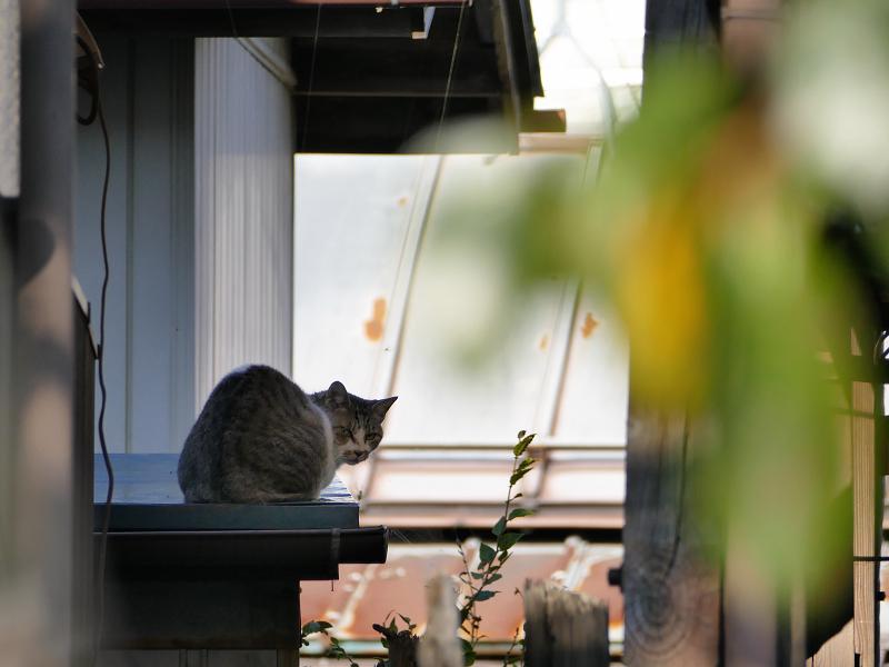 庇で振り返る猫