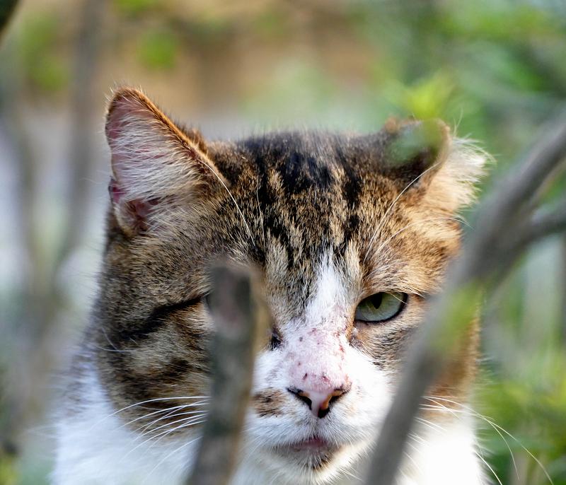 ブッシュの猫1
